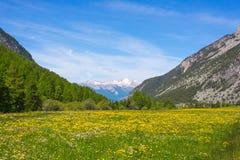 Зеленый и желтый зацветая луг Стоковое фото RF