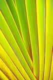 Зеленый и желтый с красным концом-вверх краев Стоковая Фотография