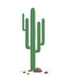 Зеленый кактус на скалистой почве Техаса изолированной на белой предпосылке Стоковые Фотографии RF