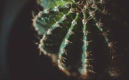 Зеленый кактус Стоковые Изображения