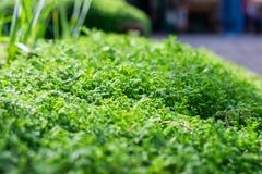 зеленый камень мха Стоковая Фотография RF