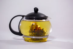 Зеленый китайский бутон цветка чая зацветая в стеклянном чайнике На белой предпосылке Стоковые Фото