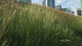 Зеленый конец крыши вверх по съемке Ванкуверу тележки Стоковое Изображение RF