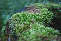 Зеленый конец мха леса вверх Стоковая Фотография