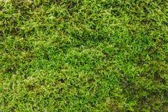 Зеленый конец backgruond мха вверх Стоковое Изображение RF