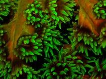 Зеленый коралл чашки стоковое изображение
