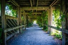 Зеленый коридор Стоковое Фото