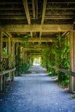Зеленый коридор Стоковые Фотографии RF