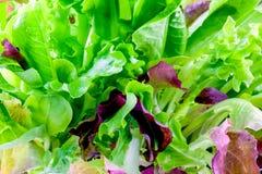 зеленый красный цвет салата Стоковые Фото