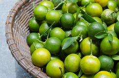 Зеленый кумкват в корзине Стоковая Фотография RF