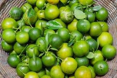 Зеленый кумкват в корзине Стоковые Изображения
