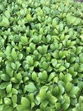 Зеленый кустарник лист Стоковые Изображения RF