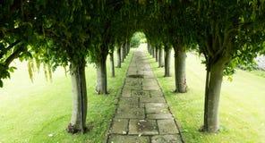 Зеленый кустовидный тоннель дерева в лете с вымощая слябами Стоковая Фотография RF