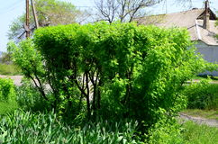 Зеленый куст в форме загородки Стоковые Изображения RF