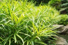 Зеленый куст на камне Стоковое Изображение RF