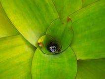 Зеленый куст с длинными яркими листьями и каплями росы в центре стоковые фото