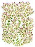 Зеленый куст с красными ягодами Стоковые Изображения