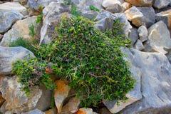 Зеленый куст Стоковые Изображения RF