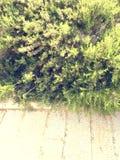 Зеленый куст Стоковая Фотография