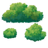Зеленый куст Стоковые Изображения