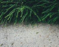 Зеленый куст стоковое фото