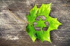 Зеленый кленовый лист с рециркулирует символ Стоковое фото RF