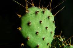 Зеленый макрос кактуса Стоковое фото RF