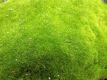 Зеленый макрос мха Стоковая Фотография RF