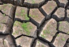 Зеленый малый завод растя на треснутой земле Стоковые Изображения RF