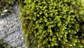 Зеленый мох на вале Стоковое Изображение RF