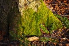 Зеленый мох на дереве Стоковые Фотографии RF