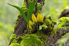 Зеленый мох на дереве Стоковое Фото