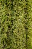 Зеленый мох на дереве Стоковые Фото