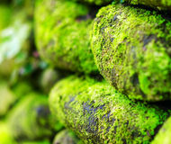 Зеленый мох на старой каменной стене Стоковая Фотография