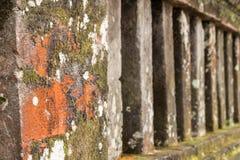 Зеленый мох на старой стене, мох на стене, крупный план мха на стене Остров Бали Стоковое Изображение