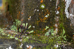 Зеленый мох на старой стене, мох на стене, крупный план мха на стене Остров Бали Стоковые Изображения RF