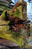 Зеленый мох на старом дереве Стоковое Изображение RF