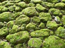 Зеленый мох на стене утеса Стоковые Фотографии RF