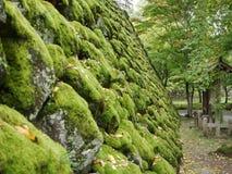 Зеленый мох на стене утеса Стоковые Фото