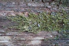 Зеленый мох на текстуре дерева Стоковые Изображения