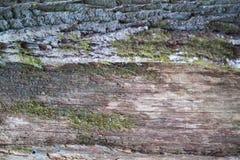 Зеленый мох на текстуре дерева Стоковое фото RF