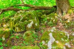 Зеленый мох на утесах Стоковые Изображения RF