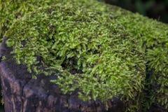 Зеленый мох покрывая журнал Стоковая Фотография