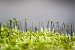 Зеленый мох Стоковые Изображения RF