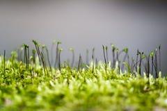 Зеленый мох Стоковое Фото