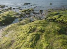 зеленый мох Стоковые Изображения