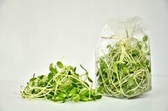 Зеленый молодой росток солнцецвета Стоковые Изображения RF