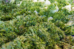 зеленый овощ Стоковые Изображения RF