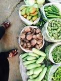 зеленый овощ Стоковое Изображение