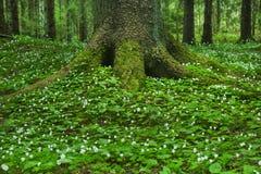 зеленый дождевый лес Стоковое Фото